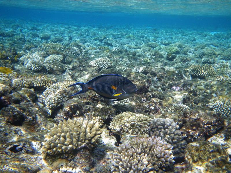 лучший коралловый риф