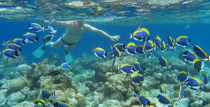 кралловый риф