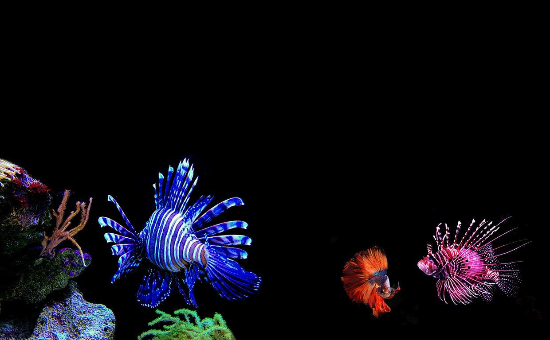 Коралловый риф Египет